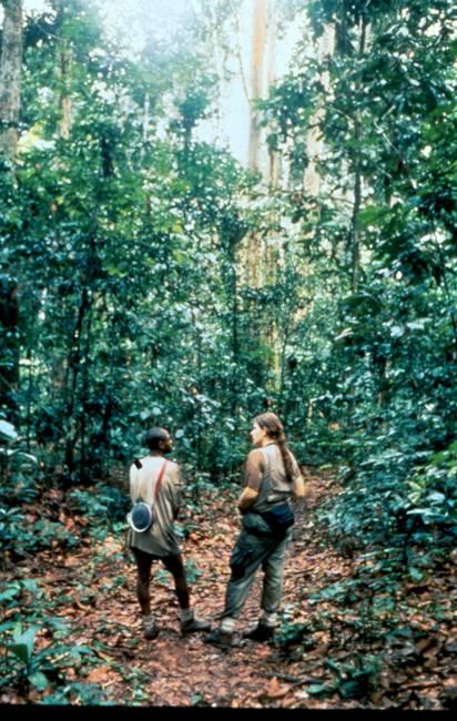 Remis and Wonga track gorillas 1992